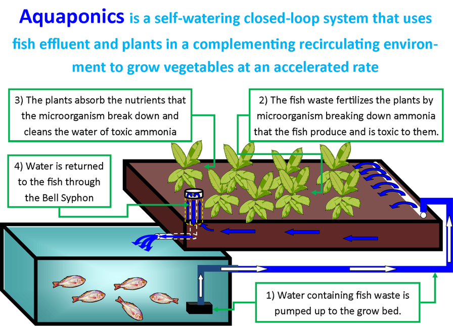 How Does Geothermal Energy Work further Aquaponics System How Does ...